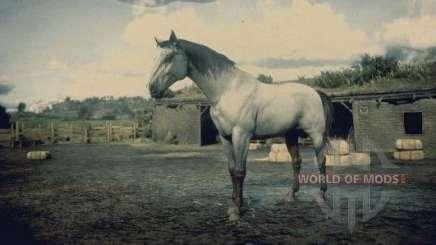 Gris de caballos de Kentucky