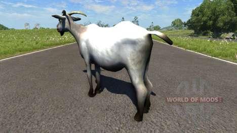 Cabra para BeamNG Drive