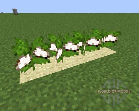 Desert Cotton Mod para Minecraft