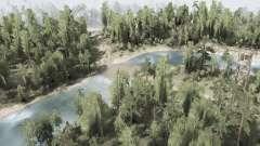 El bosque 1